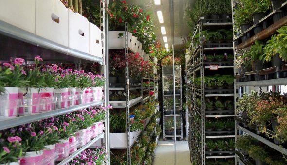 Uitgebreide geconditioneerde carrosserie voor bloemen en planten transport